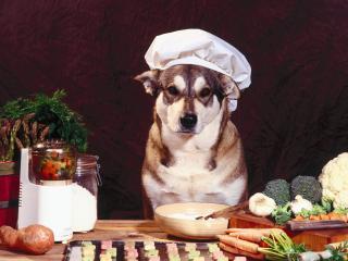 обои Собачка-повар фото