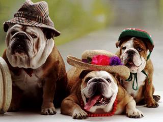обои Трое в шляпах фото