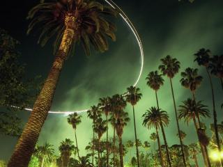 обои Ночь и пальмы фото