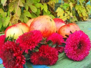 обои Красные яблоки и астры фото