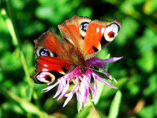 обои Бабочка на фоне зелёных листьев фото