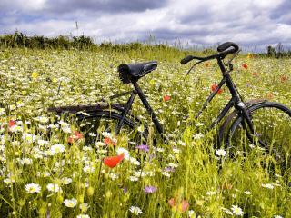 обои Велосипед на обильно цветущем поле фото
