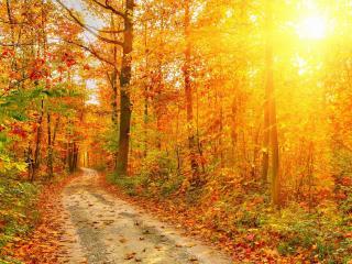 обои Красивая осень у дороги лесной фото