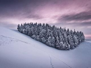 обои Небольшая посадка деревьев на холме фото