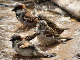 обои Весенний банный день фото