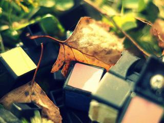 обои Сломаный кубик в листьяx фото