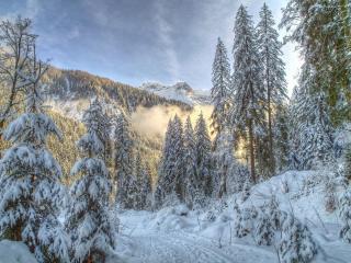 обои Снег выпал в лесу  хвойном в гораx фото