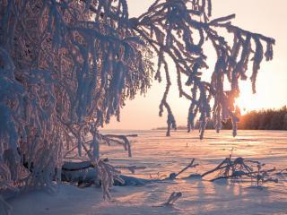 обои Солнечный и зимний день со снегом фото