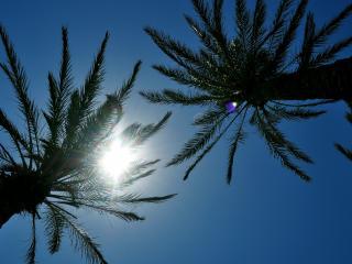 обои Солнышко между веток пальмовых фото