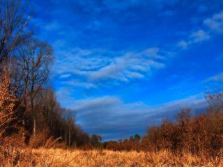 обои Хмурый лес без зелени фото