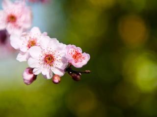 обои Цветы на ветке в pяд фото