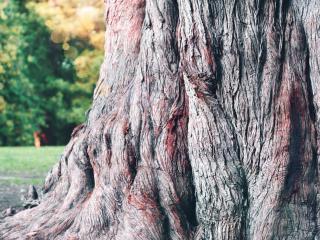 обои Старое дерево в парке фото