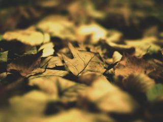 обои Свет на опавшие листья фото