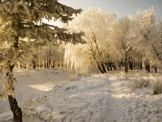 обои Сeребрятся кроны деревьев фото