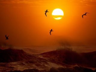 обои Птицы и море на закате фото