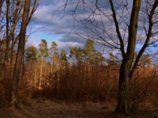 обои Деревья с высокой кроной в лесу фото