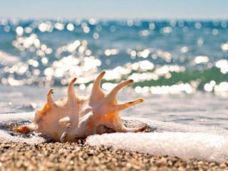 обои Ракушка на фоне блестящего моря фото