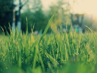 обои Зеленая и сочная трава фото