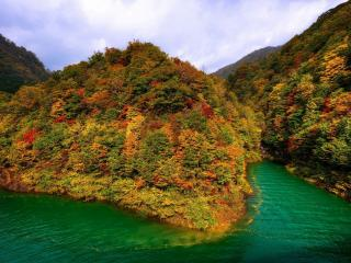обои Осенние деревья с опадающей в воду листвой на берегу фото