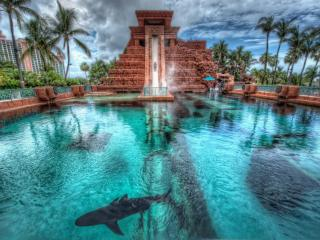 обои Небольшие акулы в бассейне фото