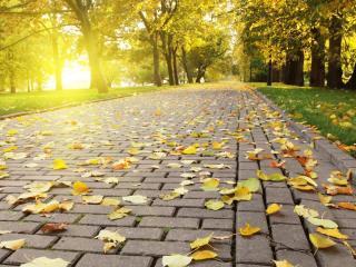 обои Опадающие листья на дорожке в парке oсеннем фото