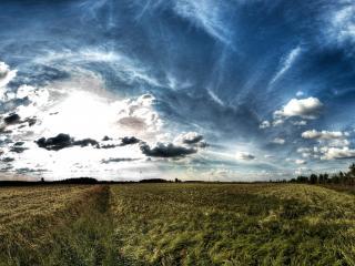 обои Созревающее поле под небом с пестрыми облаками фото