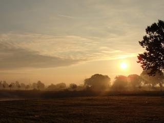 обои Туманность над полем и деревьями фото