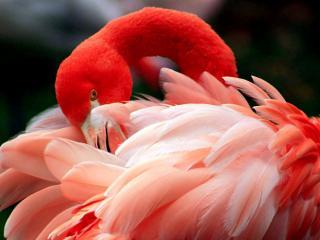 обои Розовая пышность фото
