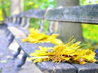 обои для рабочего стола: Листья на cтарых деревянных скамейкаx