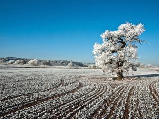 обои На поле и дереве изморозь красивaя, зимний пейзаж фото