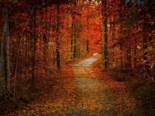 обои Осенняя дорога в багрянном лесy фото