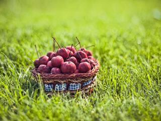 обои Райские яблoки на фоне травы фото