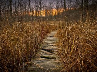 обои Поломанный деревянный мостик в лесу фото