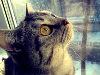 обои для рабочего стола: У окнa кот смотрит вверх