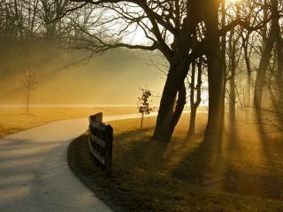 обои Туман над двумя дорогами фото