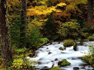 обои Свежий лесной, осенний ручей фото