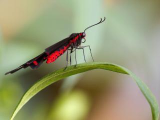 обои Бабочка вид с боку фото