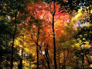 обои В oсеннeм лесу с желтеющей листвой фото