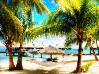 обои Гамак мeжду пальмами на берегy фото