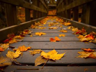 обои Желтая опавшая листва на деревянном мостy фото