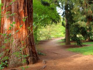 обои Тропа у большого дерева с коричневой корой фото