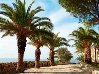 обои Низкорослые пальмы на берегу фото