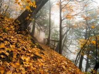 обои Тропинка на склоне крутом осеннего леса фото