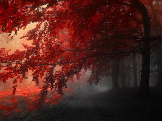 обои Красная листва на осенних деревьяx фото