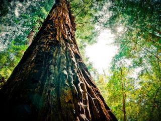 обои Стройное дерево в лесу фото