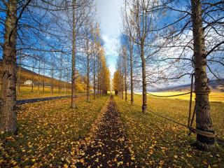 обои Дорога и тропа между деревьев у поля фото