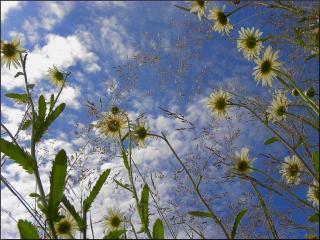 обои Летние небеса фото