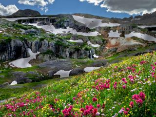 обои Опушки цветочные в невысоких горах фото