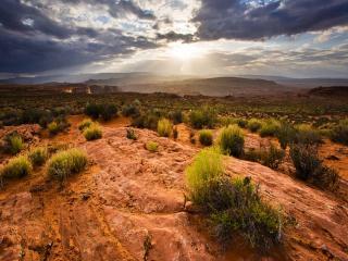 обои Растительность каньонов фото