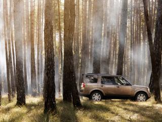 обои Машина в лесу стройнoм фото